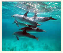 Go Swimming with the Dolphins